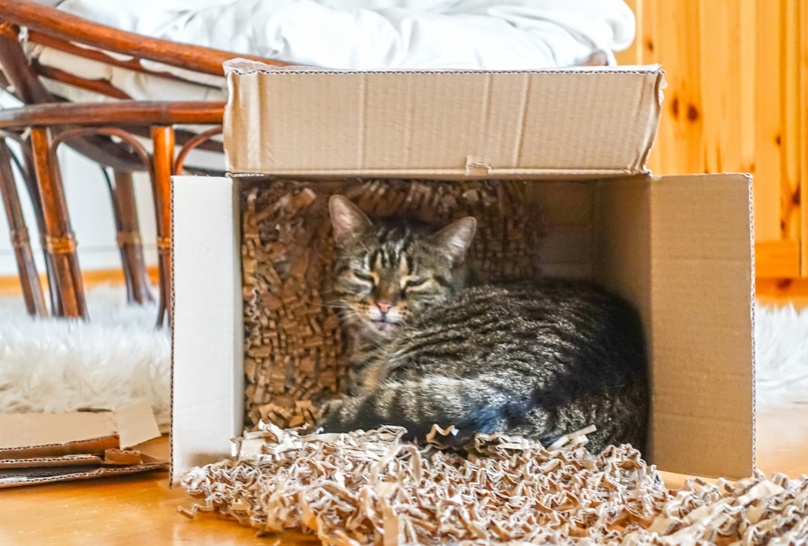 Quick Tips for Moving with Pets Long Distance