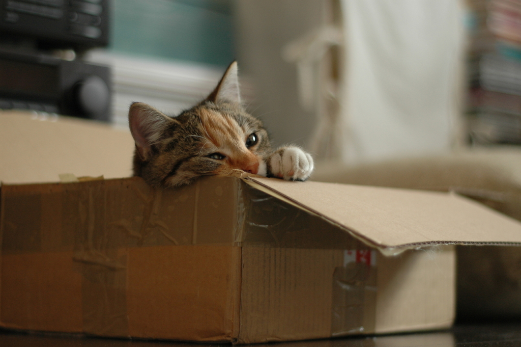 Pet Moving Services